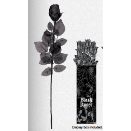Cemetry Black Rose