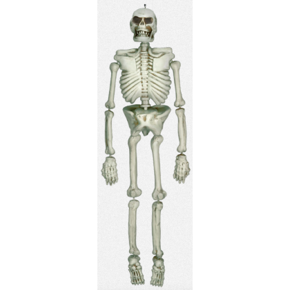 Cemetry Life Size Plastic Skeleton